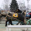Photos: ギンノダイマオー レース(19/02/03・7R)