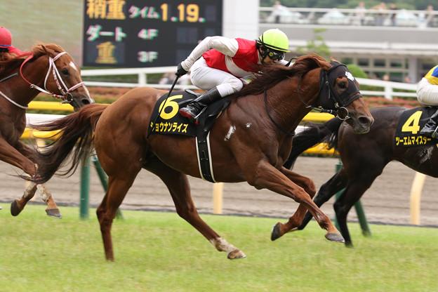 ショウナンライズ  レース(19/06/22・ウッドパイン競馬場賞パラダイスステークス)