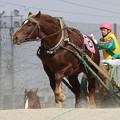 ドラゴンヘッド レース(19/03/02・2R)