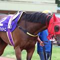Photos: ポルタディソーニ  パドック(19/07/15・スポーツニッポン賞 第23回  名港盃)
