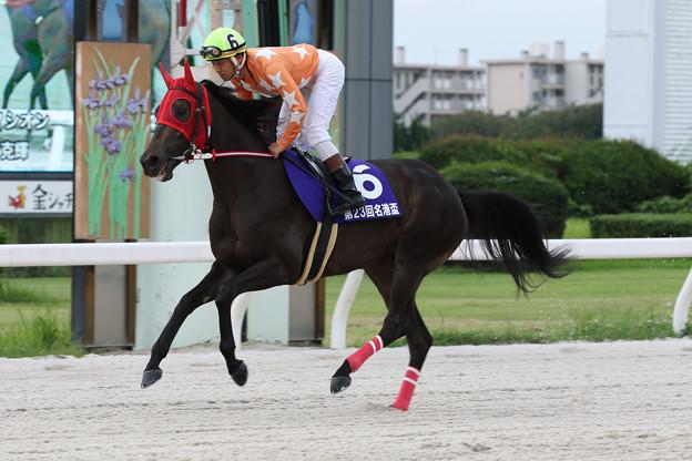 エムエスクイーン 返し馬(19/07/15・スポーツニッポン賞 第23回 名港盃)