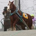 Photos: ラブチャン レース(19/03/02・5R)