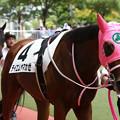 Photos: テイエムヤマカゼ パドック(19/07/27・新馬戦)