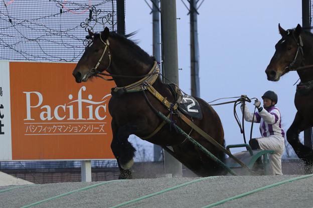 Photos: ホクショウマサル レース(19/03/02・とかち晩冬賞)
