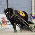 マツリダワッショイ レース(19/03/03・4R)