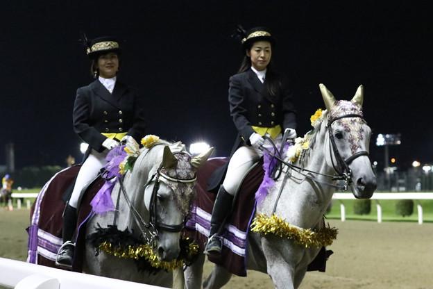 川崎競馬場 誘導馬_1(19/09/04・サンケイスポーツ盃 第48回 戸塚記念)