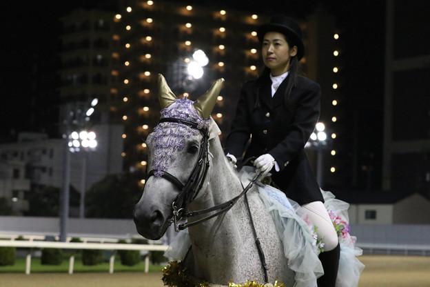 川崎競馬場 誘導馬_2(19/09/04・サンケイスポーツ盃 第48回 戸塚記念)