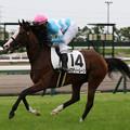 Photos: メロディーレーン  返し馬(19/07/13・8R)