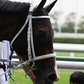 Photos: クリュティエ(19/07/13・4R)