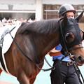 Photos: タンタラス パドック(19/07/13・8R)