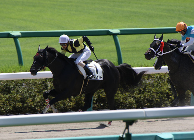 ニーマルサンデー レース(19/09/07・4R)