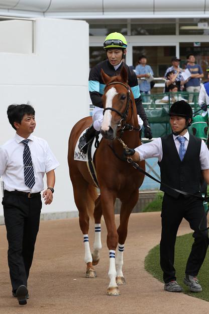 Photos: シャインガーネット パドック_3(19/09/08・新馬戦)