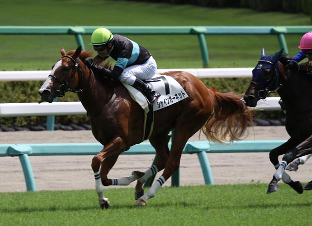 シャインガーネット レース(19/09/08・新馬戦)