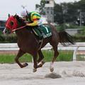 ダルマワンサ レース(19/09/12・中京スポーツ杯 第44回 秋風ジュニア)