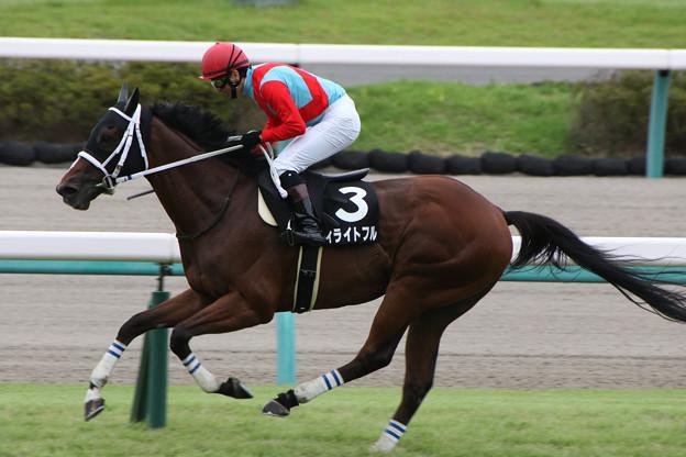 ディライトフル レース(19/09/21・清秋ジャンプステークス)