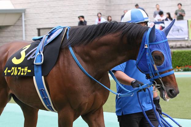 イーグルフェザー  パドック(19/10/06・グリーンチャンネルカップ)