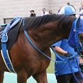 Photos: イーグルフェザー  パドック(19/10/06・グリーンチャンネルカップ)