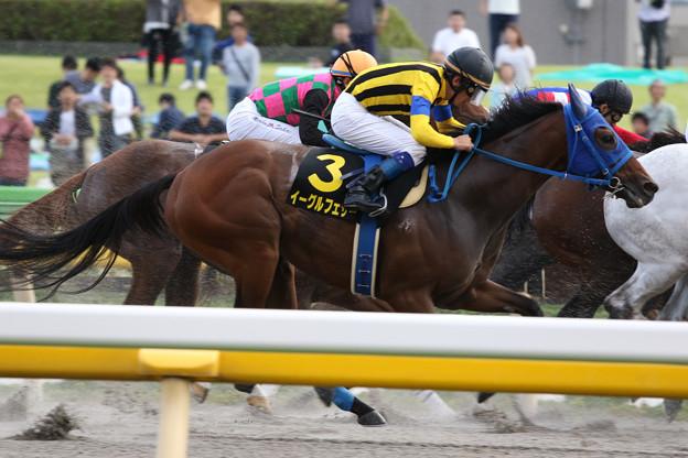 イーグルフェザー レース(19/10/06・グリーンチャンネルカップ)