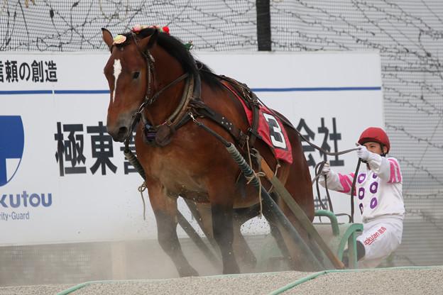 ホクセイタイショウ レース(19/09/22・利根別賞)