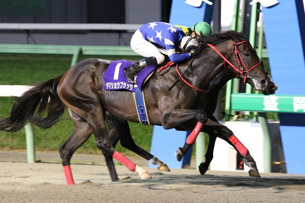 ヤマショウブラック レース(19/09/16・第51回 不来方賞)