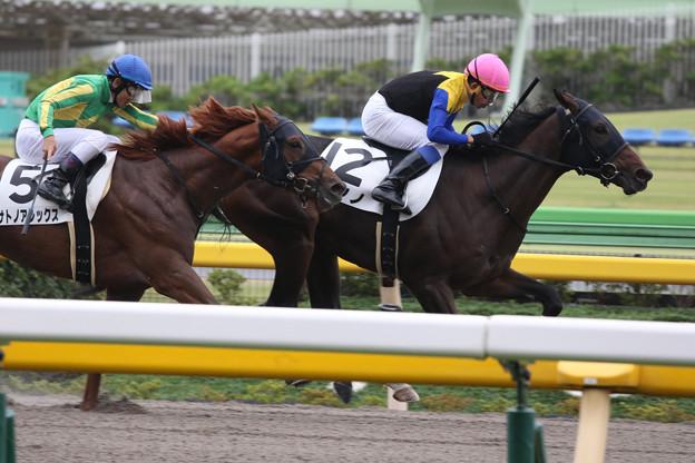 ピオノノ レース(19/10/14・2R)
