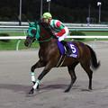 Photos: パンプキンズ 返し馬(19/09/16・第51回 不来方賞)