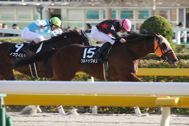 ブルドックボス レース(14/11/15・オキザリス賞)