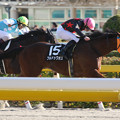 Photos: ブルドックボス レース(14/11/15・オキザリス賞)