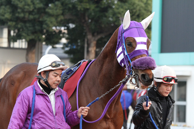 マンボビーン パドック(12/11/23・第51回 楠賞)