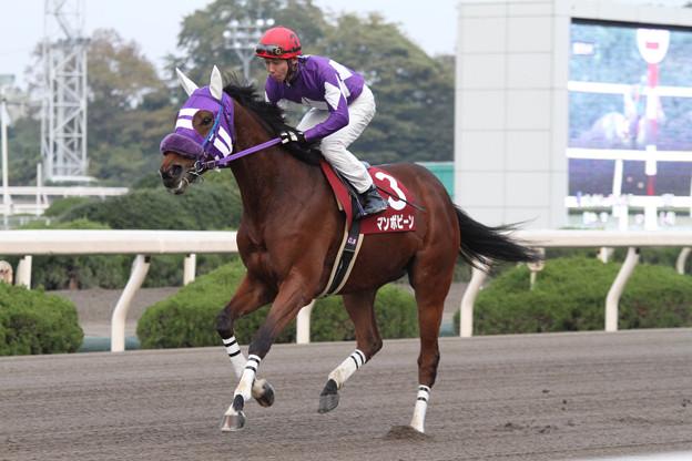 マンボビーン 返し馬(12/11/23・第51回 楠賞)