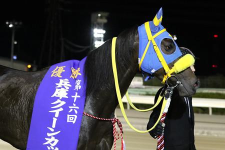 ヤマミダンス(19/11/08・第16回 兵庫クイーンカップ)