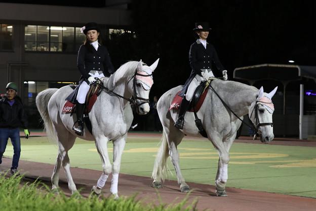 園田競馬場 誘導馬(19/11/08・第16回 兵庫クイーンカップ)