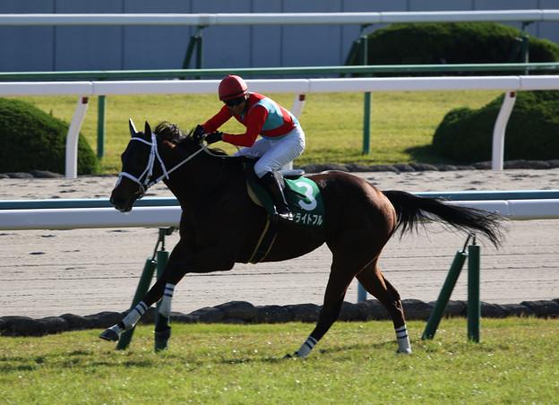 ディライトフル レース(19/11/09・第21回 京都ジャンプステークス)