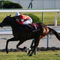 レッドベルジュール レース(19/11/09・第54回 デイリー杯2歳ステークス)