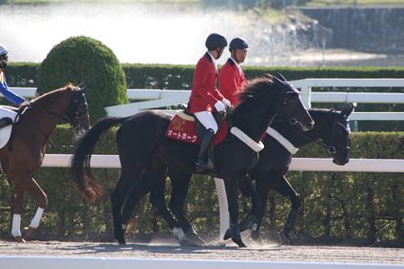 オートホーク_2(19/11/09・京都競馬場)