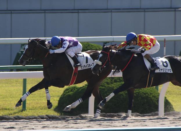 サンライズホープ レース(19/11/09・新馬戦)