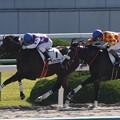 Photos: サンライズホープ レース(19/11/09・新馬戦)
