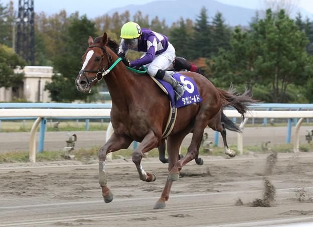 タガノゴールド レース(19/11/10・第67回 北國王冠)