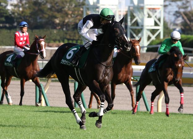 クラヴァシュドール 返し馬(19/10/05・第5回 サウジアラビアロイヤルカップ)