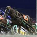 Photos: サカノミスター レース_1(19/11/02・4R)