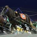 Photos: サカノミスター レース_2(19/11/02・4R)