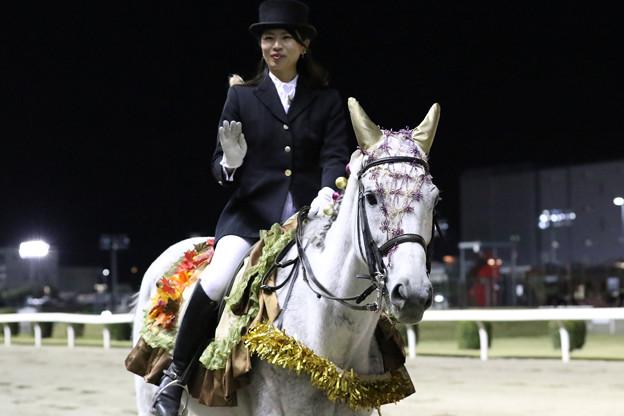 川崎競馬場 誘導馬_2(19/11/19・第19回 ローレル賞)