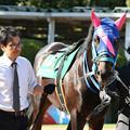 Photos: メイショウゴウリキ パドック(19/08/24・第21回 新潟ジャンプステークス)