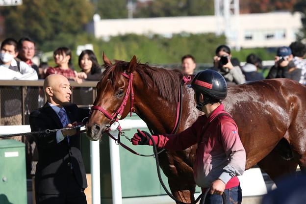 シンキングダンサー_1(19/11/16・秋陽ジャンプステークス)