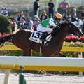 Photos: ティートラップ レース(19/11/17・新馬戦)