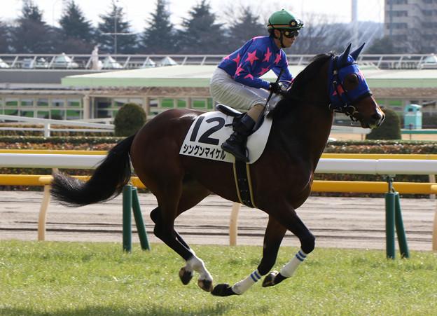 シングンマイケル  返し馬(17/01/29・新馬戦)