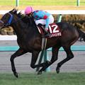 モンドインテロ レース(19/11/30・第53回 スポーツニッポン賞ステイヤーズステークス)