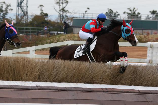 ルグランフリソン レース_2(19/12/07・4R)