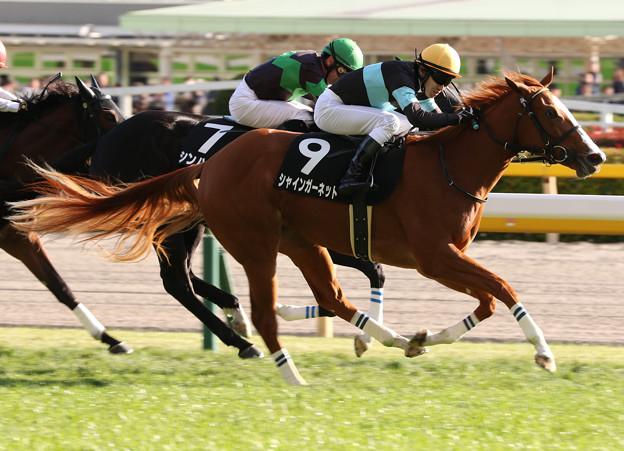 シャインガーネット レース(19/11/17・赤松賞)