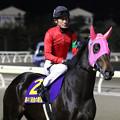 Photos: リワードアヴァロン 馬場入場(19/12/28・高知市長賞典 第41回 金の鞍賞)